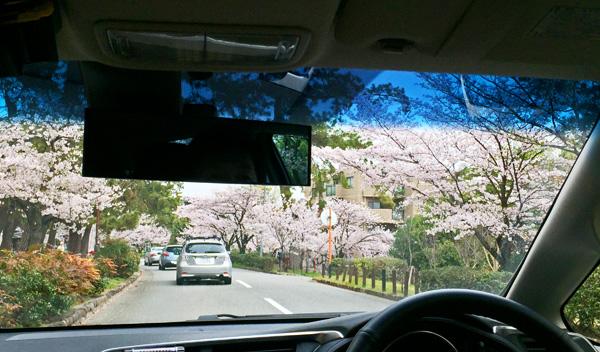 05Apl16_sakura