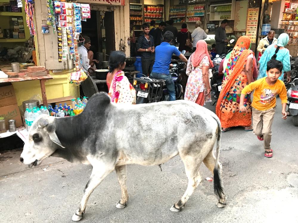 03Mar18Pushkar45